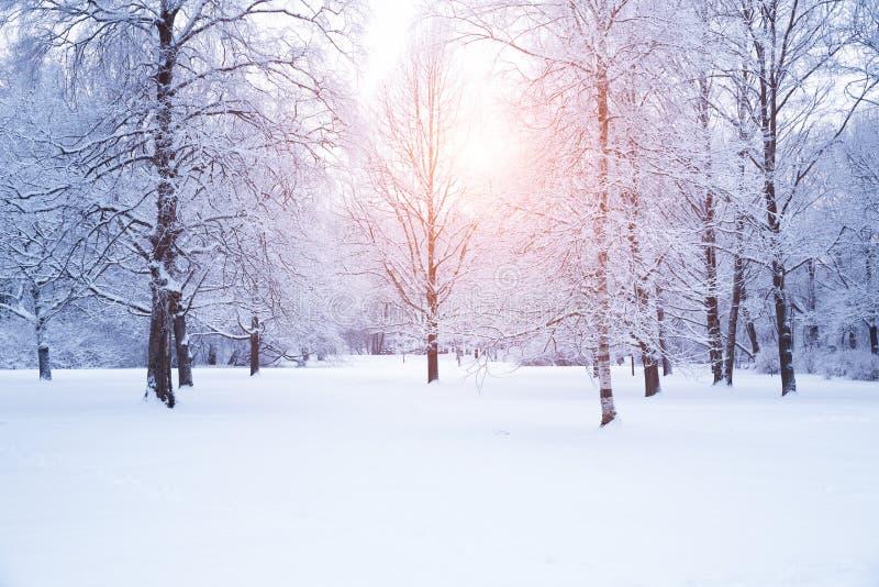 Предпосылка зимы, ландшафт Деревья зимы в стране чудес Зима стоковая фотография rf