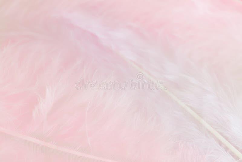Download Предпосылка изображения конца поднимающего вверх пастельного пинка оперяется Стоковое Изображение - изображение насчитывающей природа, свет: 81811407