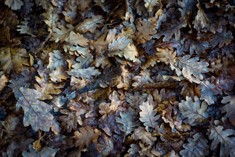 Предпосылка листьев осени стоковое изображение