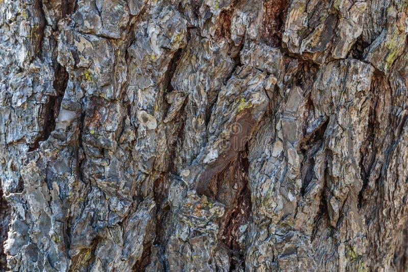 Предпосылка коры дерева стоковые изображения rf