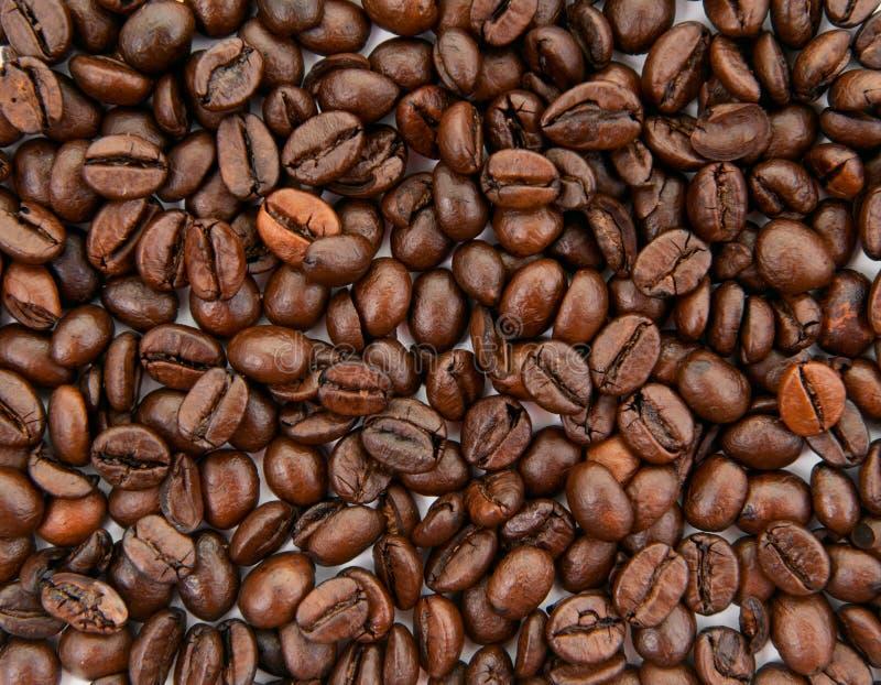 Предпосылка кофейных зерен стоковые фотографии rf