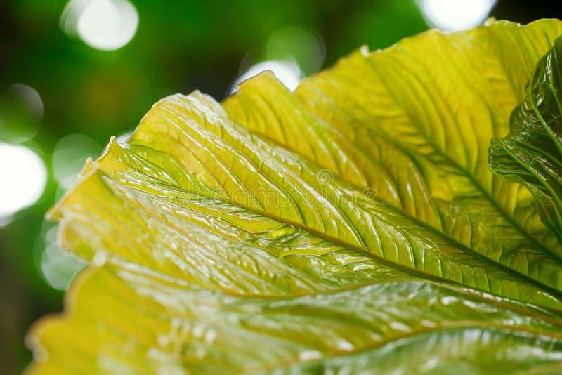 Предпосылка зеленых листьев стоковое изображение rf