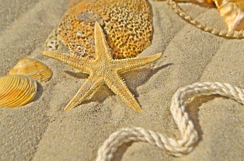 Предпосылка морских звёзд и seashells стоковая фотография rf