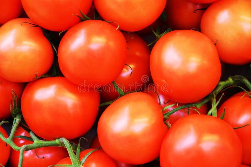 Предпосылка овоща томатов стоковые изображения