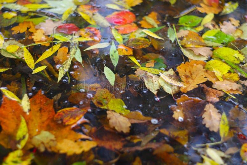 предпосылка осени выходит вода стоковые изображения rf