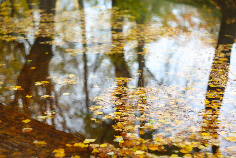 предпосылка осени выходит вода стоковые фотографии rf