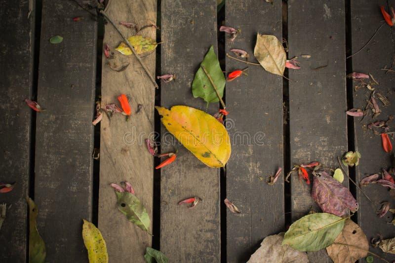 предпосылка осени выходит древесина стоковое фото rf