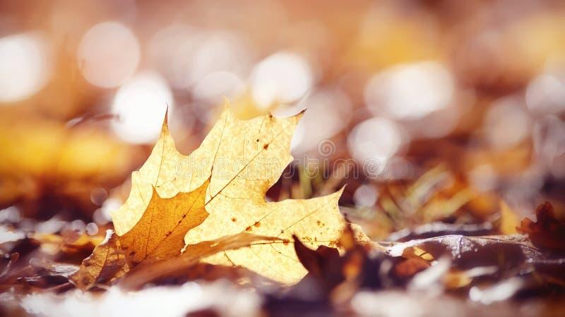Предпосылка осени от упаденных кленовых листов стоковые фото