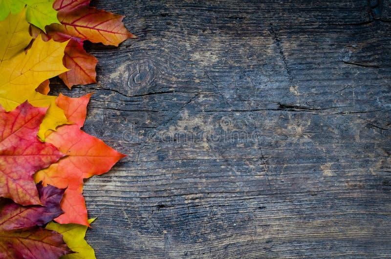 Предпосылка осени с листьями падения стоковое изображение