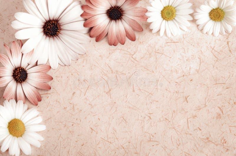 Предпосылка пергамента обрамленная с цветками стоковые изображения rf