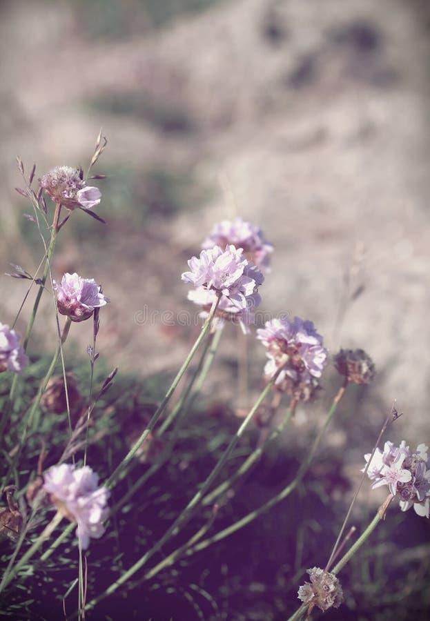 Предпосылка полевого цветка фиолетовой сирени пастельная сделанная с цветными поглотителями стоковые изображения