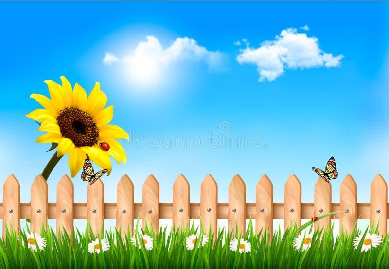 Предпосылка природы лета с солнцецветом и деревянной загородкой иллюстрация вектора