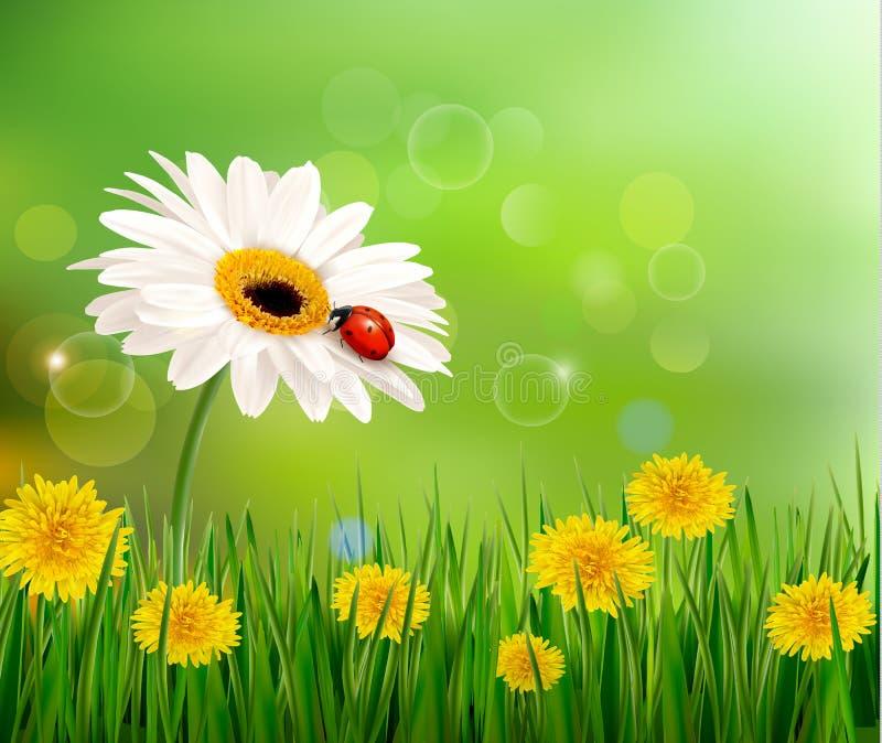 Предпосылка природы лета с ladybug на белом flo иллюстрация штока