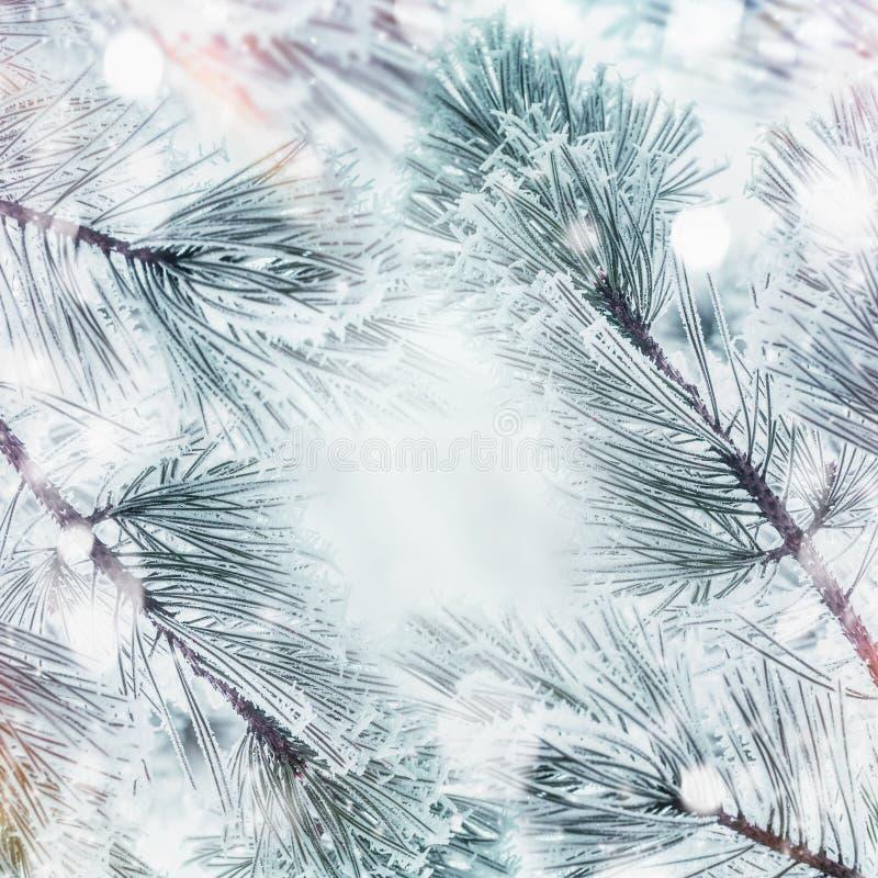 Предпосылка природы зимы с ветвями замерли рамкой, который  кедров или ель с снегом стоковое изображение rf