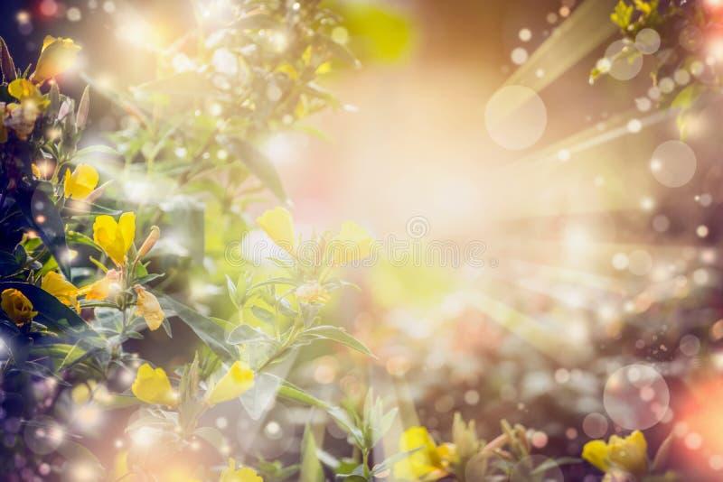 Предпосылка природы осени или лета с цветками, лучами солнца и bokeh стоковые фотографии rf