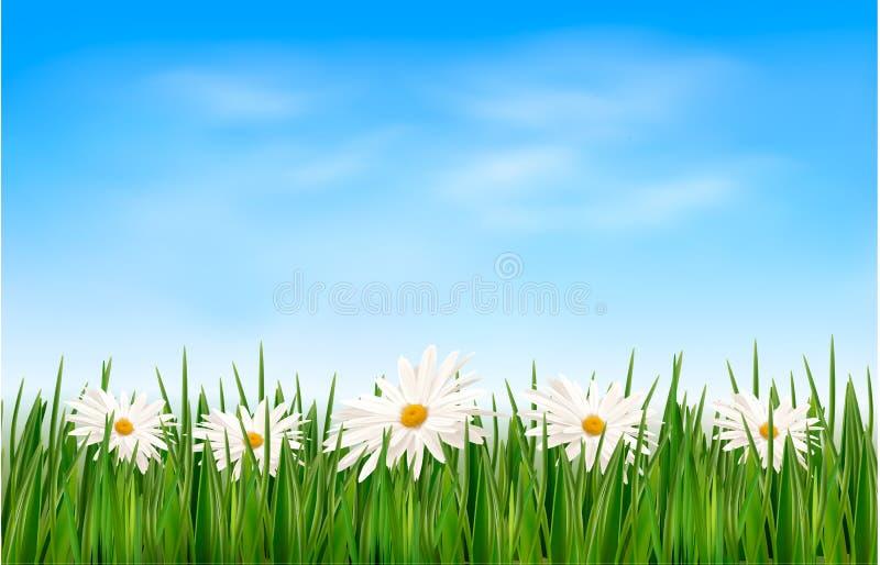 Предпосылка природы с зеленой травой и цветками и иллюстрация штока