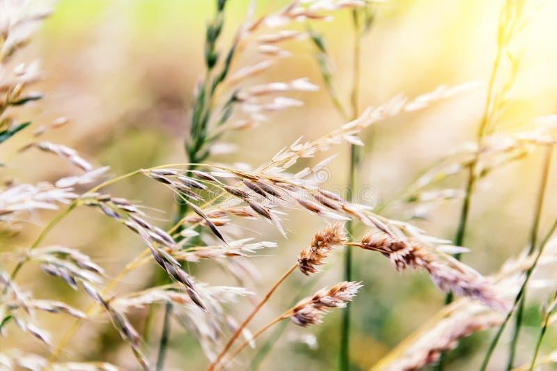 Предпосылка природы с одичалой травой стоковые изображения rf