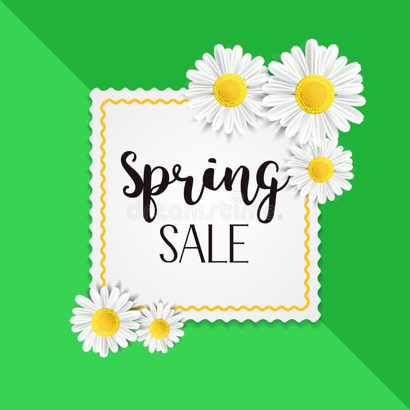 Предпосылка продажи весны с красивым белым стоцветом цветет Vector шаблон иллюстрации для знамени, обоев, рогульки бесплатная иллюстрация