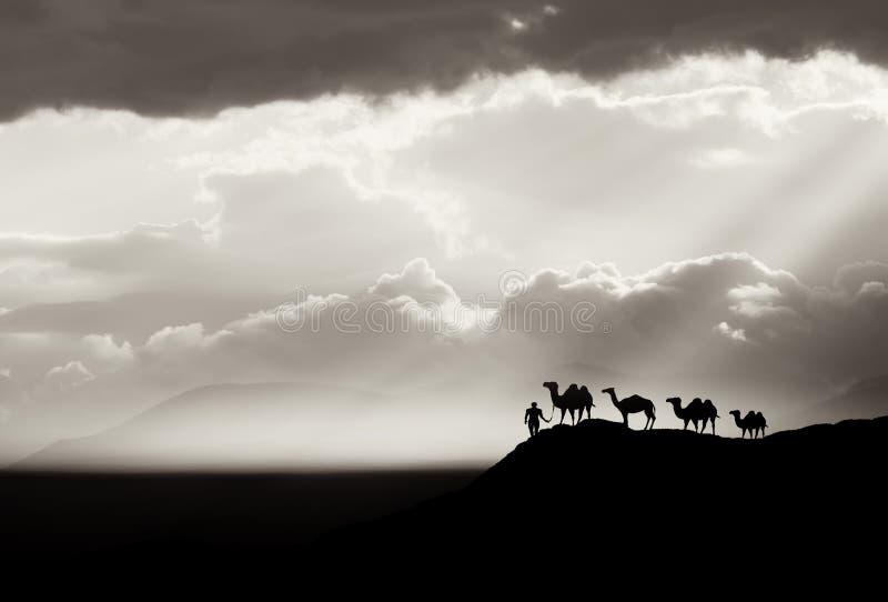 Предпосылка пустыни Bw стоковое изображение rf