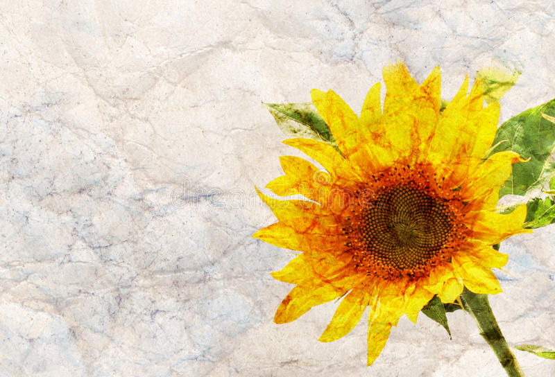 Предпосылка рамки солнцецвета иллюстрация вектора
