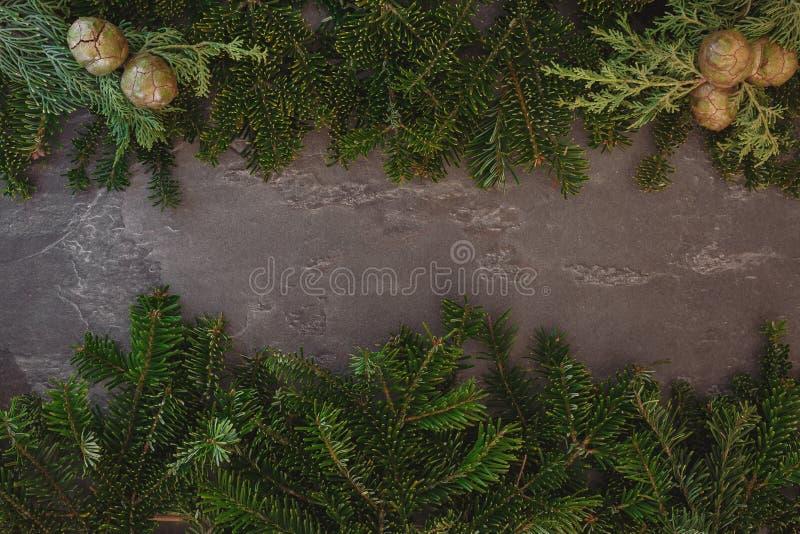 Предпосылка рождества с реальными ветвями сосны стоковые фото