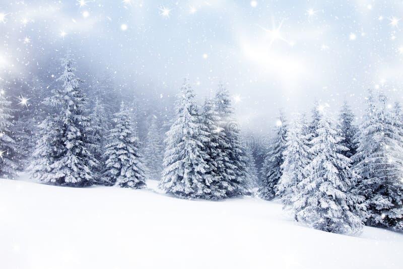 Предпосылка рождества с снежными елями стоковое изображение rf