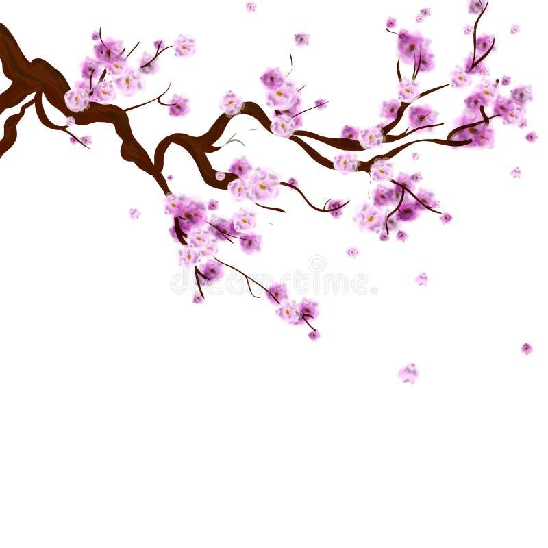 Предпосылка Сакуры акварели с ветвью вишневого дерева цветения Ha иллюстрация вектора
