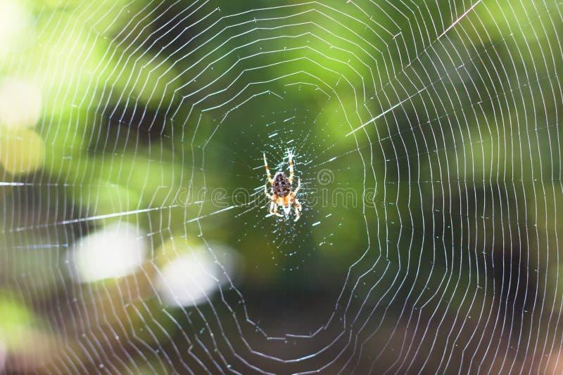 Предпосылка сети паука стоковые изображения rf