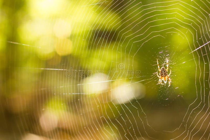 Предпосылка сети паука стоковая фотография rf