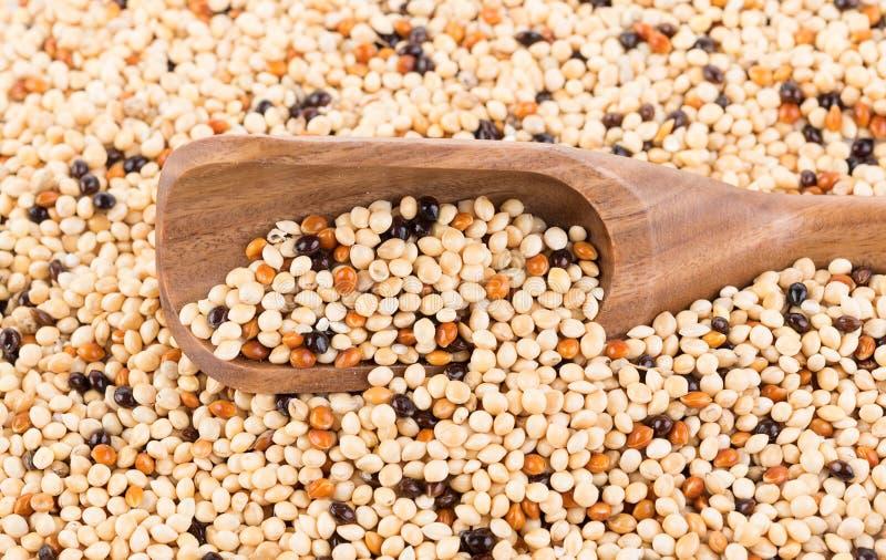 Предпосылка смеси семени Корм для домашних животных для птиц стоковое фото rf