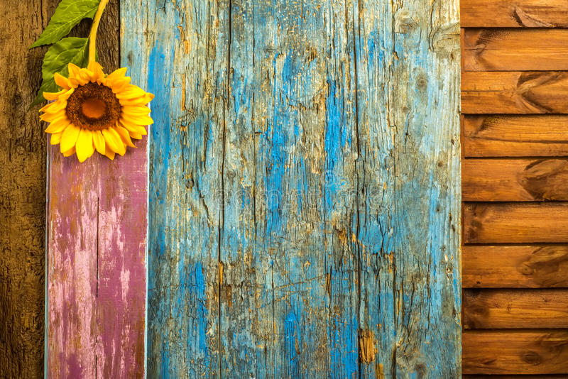 Предпосылка солнцецвета деревянная стоковая фотография