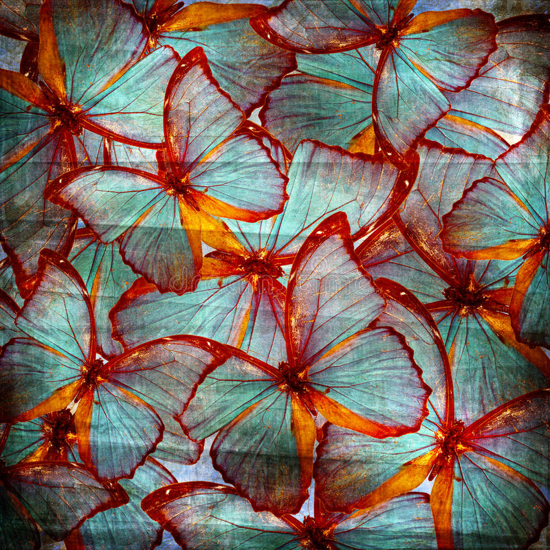 Предпосылка с бабочкой стоковые изображения