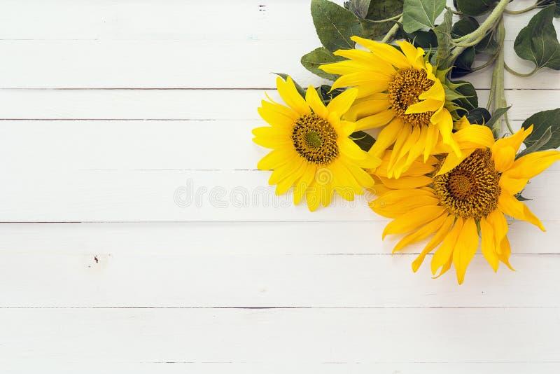 Предпосылка с букетом солнцецветов на белизне покрасила woode стоковые изображения rf