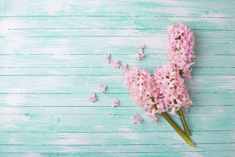 Предпосылка с гиацинтами свежих цветков стоковые фото