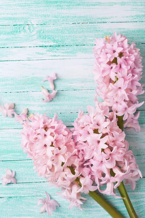 Предпосылка с гиацинтами свежих цветков стоковая фотография