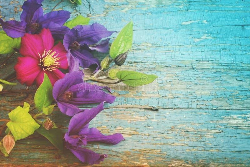 Предпосылка с голубым Clematis цветет на треснутых планках краски деревянных стоковые изображения