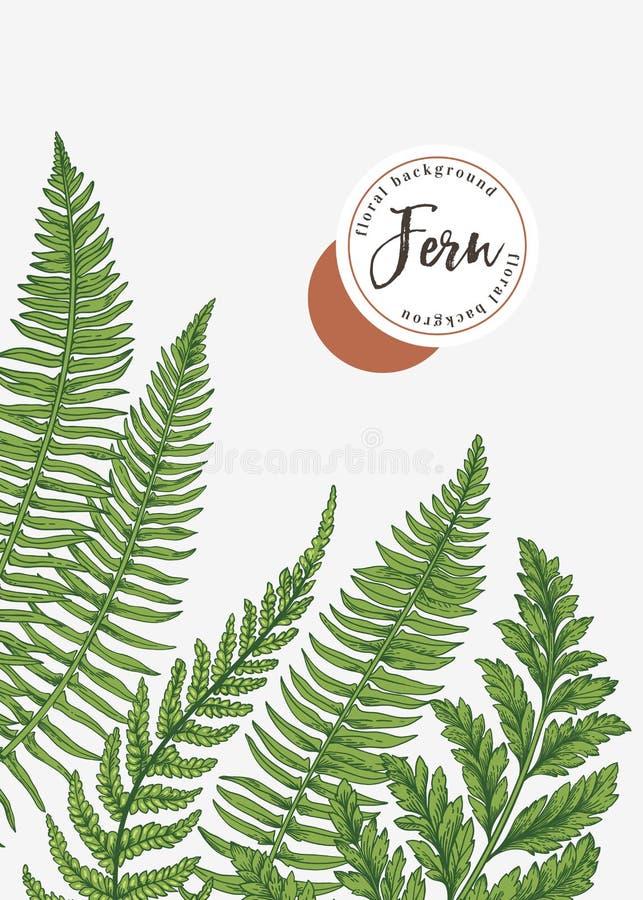 Предпосылка с листьями папоротника иллюстрация штока