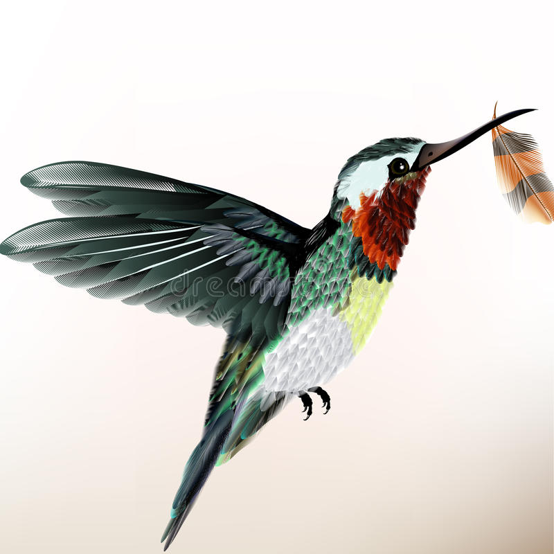 Предпосылка с красочным колибри бесплатная иллюстрация