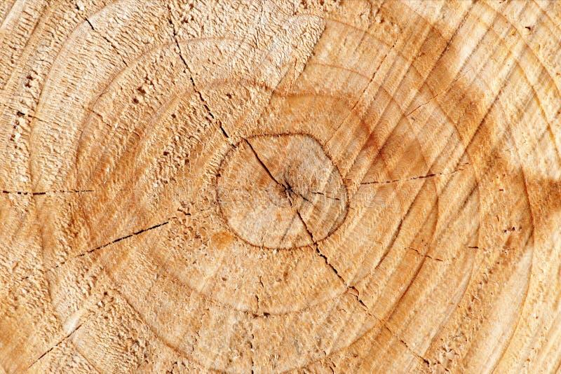 Поперечное сечение дерева стоковые изображения