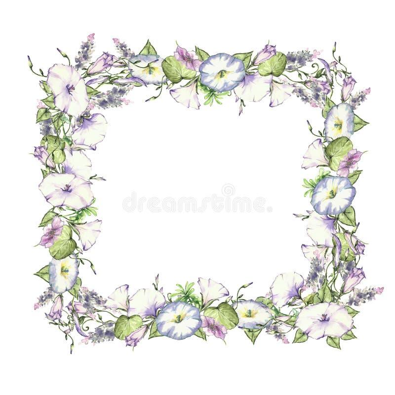 Предпосылка с полевыми цветками чертежа акварели, круглая флористическая рамка, венок с покрашенными заводами поля, травяная гран иллюстрация штока