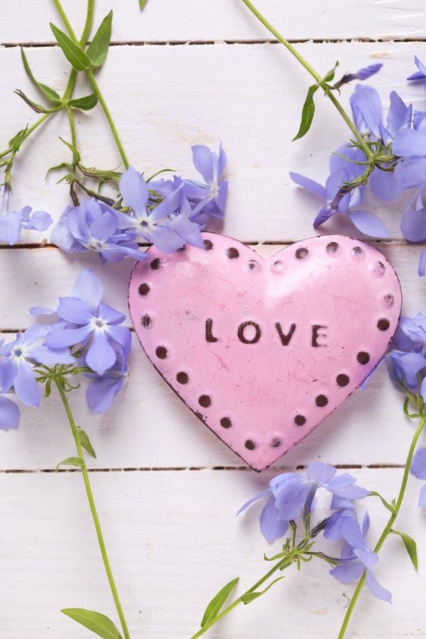 Предпосылка с розовым декоративным сердцем и свежей нежной синью fl стоковое фото