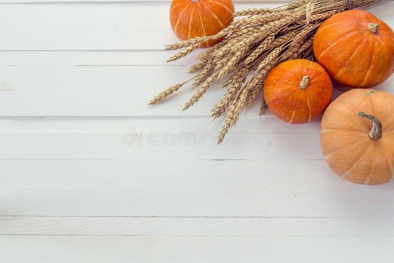 Предпосылка с тыквами и ушами пшеницы на белой деревянной горжетке стоковое фото