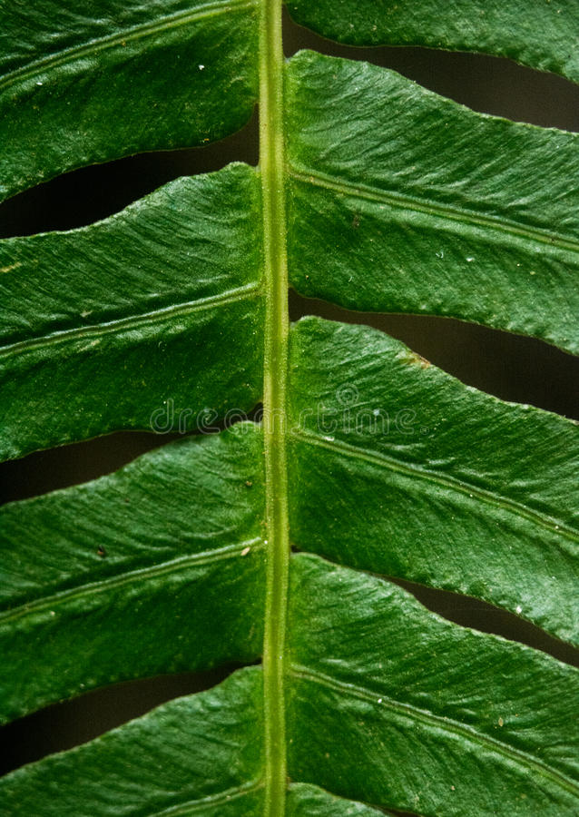 Предпосылка текстуры завода Leafe стоковое изображение