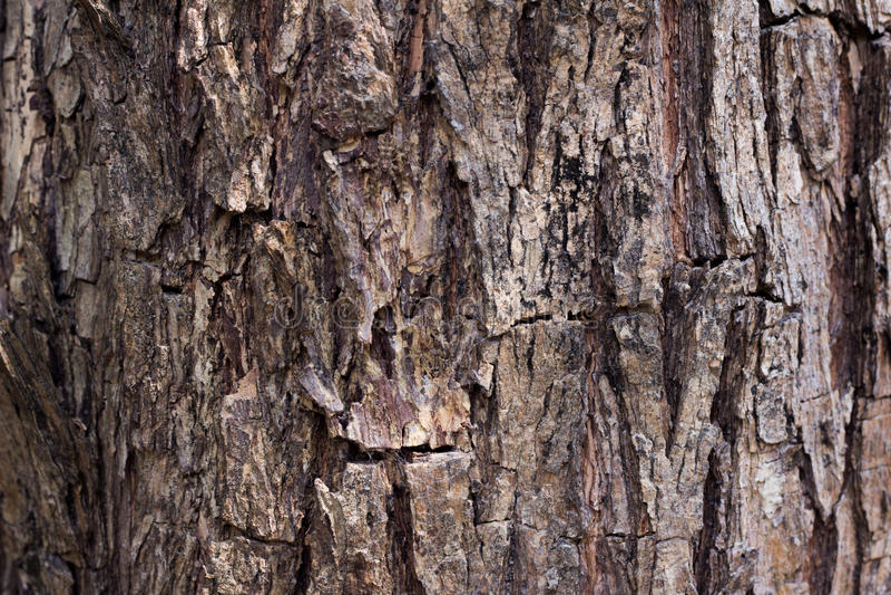 Предпосылка текстуры коры дерева стоковое изображение rf