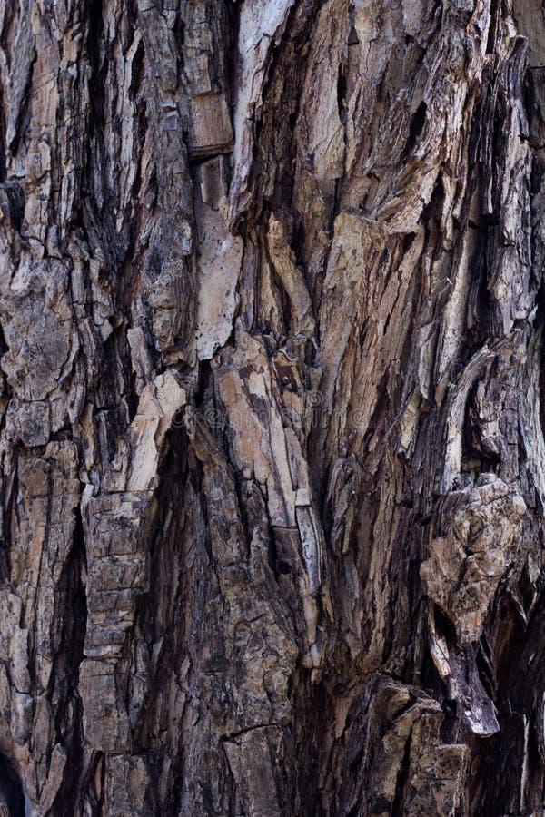 Предпосылка текстуры коры дерева стоковые фотографии rf