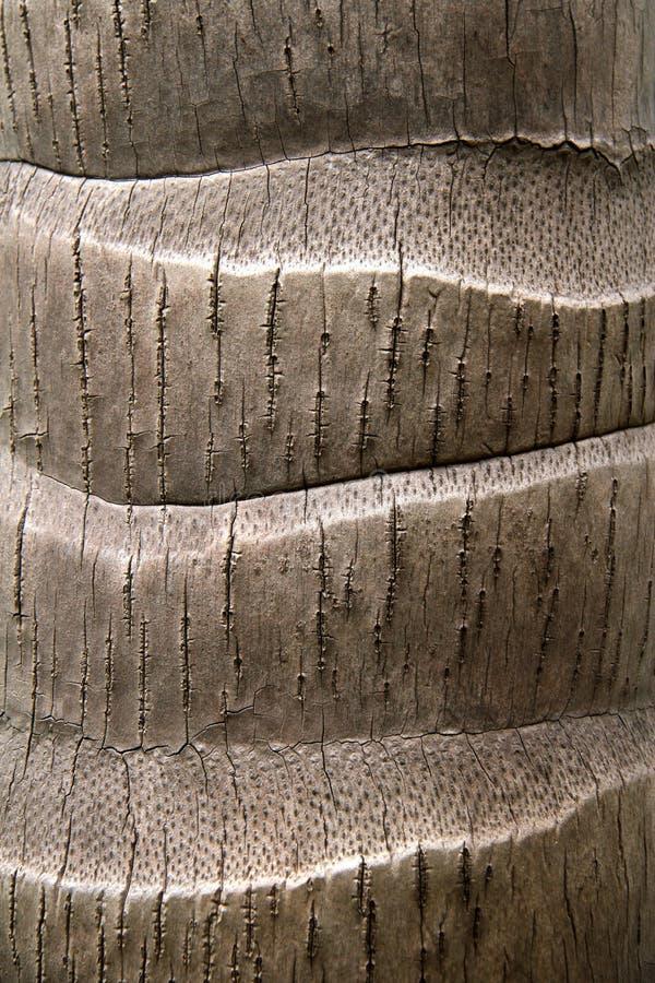 Предпосылка текстуры хобота кокосовой пальмы стоковое изображение rf