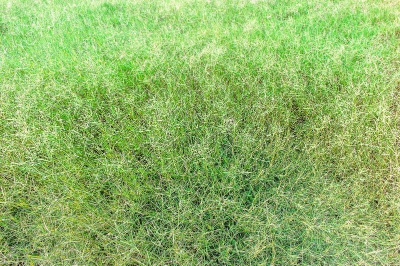 Предпосылка текстуры Sward зеленая стоковая фотография rf