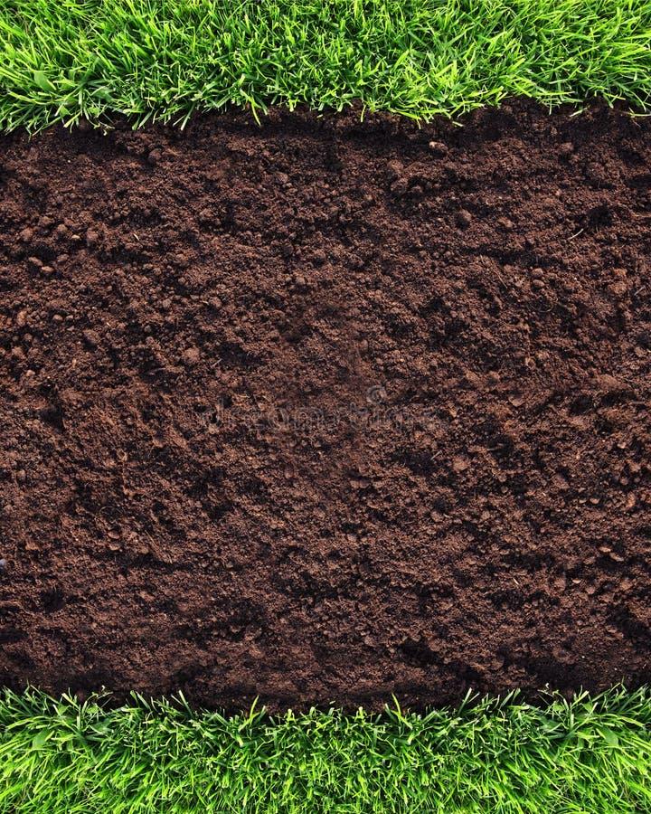 Предпосылка травы стоковые фото