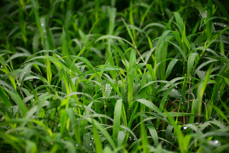 Предпосылка травы sward крупного плана стоковая фотография rf