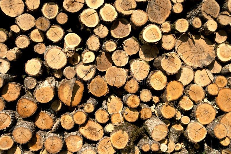 Предпосылка треснутого старого деревянного хобота с кольцами времени штабелировала для того чтобы высушить в куче outdoors стоковая фотография rf